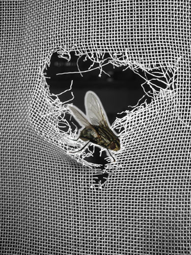 How To Repair Window Screen And Patio Door Screens