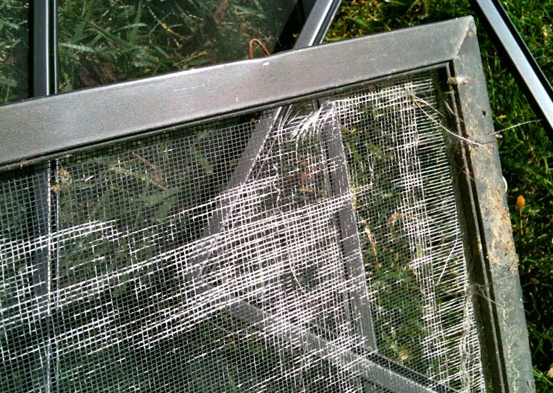Mobile window screen repair